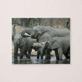 African Elephant, (Loxodonta africana), drinking Jigsaw Puzzle