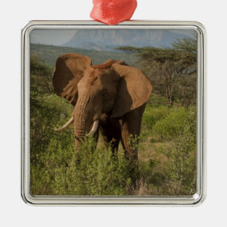 African Elephant, Loxodonta africana, in Samburu Silver-Colored Square Decoration