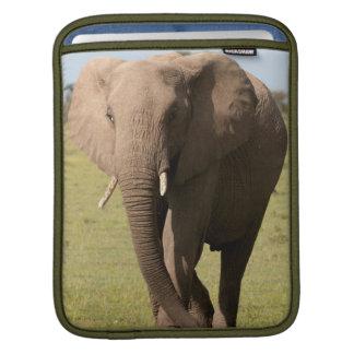 African Elephant (Loxodonta Africana), Maasai iPad Sleeve