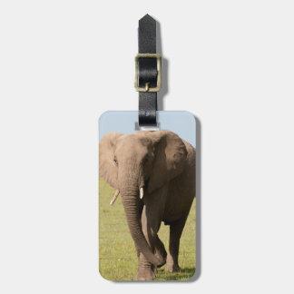 African Elephant (Loxodonta Africana), Maasai Luggage Tag