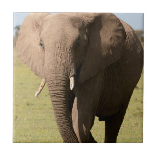 African Elephant (Loxodonta Africana), Maasai Tile