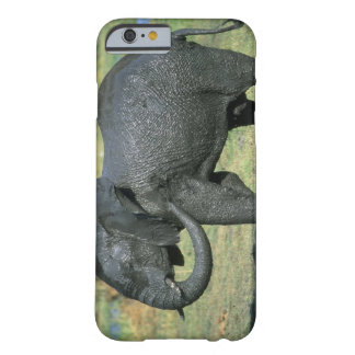 African Elephant, (Loxodonta africana), mud Barely There iPhone 6 Case