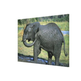 African Elephant, (Loxodonta africana), mud Canvas Print