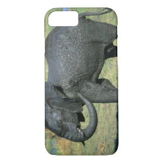 African Elephant, (Loxodonta africana), mud iPhone 7 Case