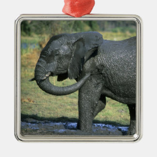 African Elephant, (Loxodonta africana), mud Silver-Colored Square Decoration
