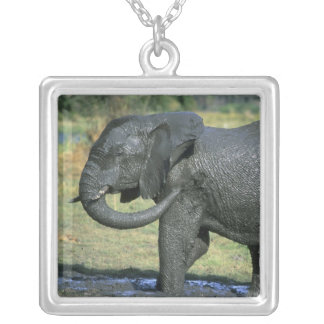African Elephant, (Loxodonta africana), mud Silver Plated Necklace