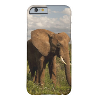 African Elephant, Loxodonta africana, out in a Barely There iPhone 6 Case