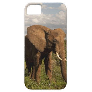 African Elephant, Loxodonta africana, out in a Case For The iPhone 5