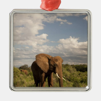 African Elephant, Loxodonta africana, out in a Christmas Ornament
