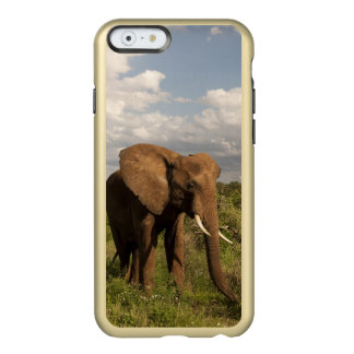 African Elephant, Loxodonta africana, out in a Incipio Feather® Shine iPhone 6 Case