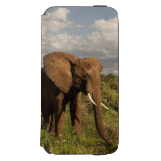 African Elephant, Loxodonta africana, out in a Incipio Watson™ iPhone 6 Wallet Case