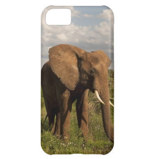 African Elephant, Loxodonta africana, out in a iPhone 5C Case