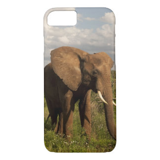 African Elephant, Loxodonta africana, out in a iPhone 8/7 Case