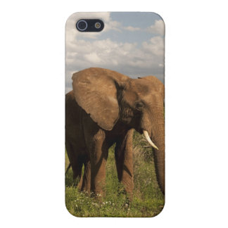 African Elephant, Loxodonta africana, out in a iPhone 5/5S Covers