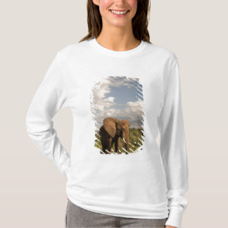 African Elephant, Loxodonta africana, out in a T-Shirt