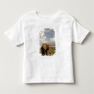 African Elephant, Loxodonta africana, out in a Toddler T-Shirt