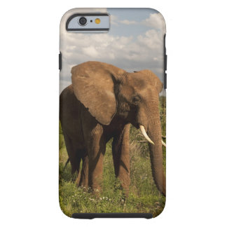African Elephant, Loxodonta africana, out in a Tough iPhone 6 Case