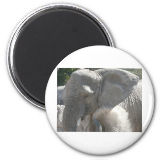 african elephant refrigerator magnets