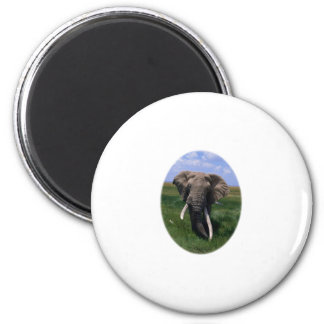 African Elephant 6 Cm Round Magnet