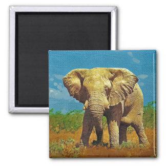 African elephant refrigerator magnet