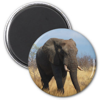 African Elephant Magnets