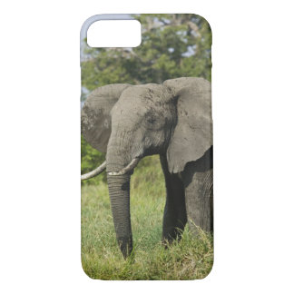 African Elephant, Masai Mara, Kenya. Loxodonta iPhone 8/7 Case