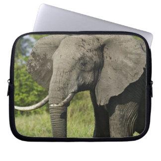 African Elephant, Masai Mara, Kenya. Loxodonta Laptop Sleeve