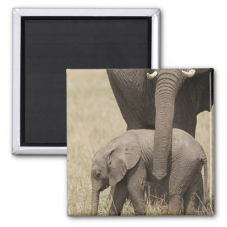 African Elephant mother with baby walking 2 Magnet