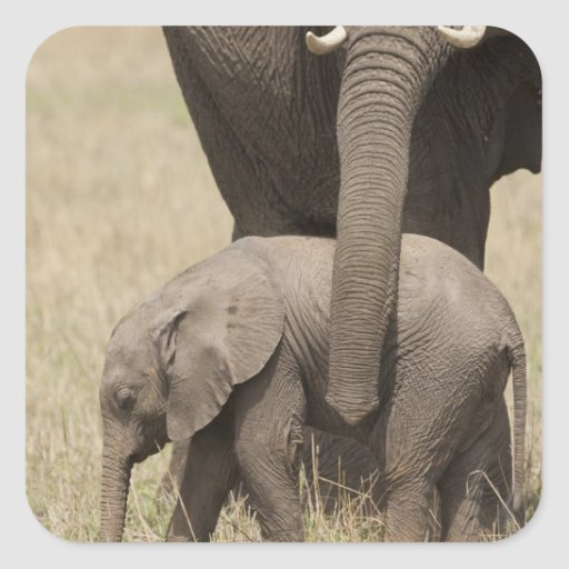 African Elephant mother with baby walking 2 Sticker
