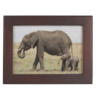 African Elephant mother with baby walking Keepsake Box