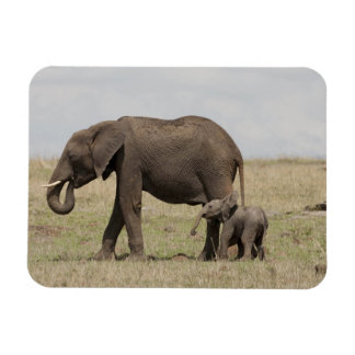 African Elephant mother with baby walking Magnet