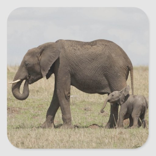 African Elephant mother with baby walking Stickers