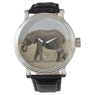 African Elephant mother with baby walking Watch