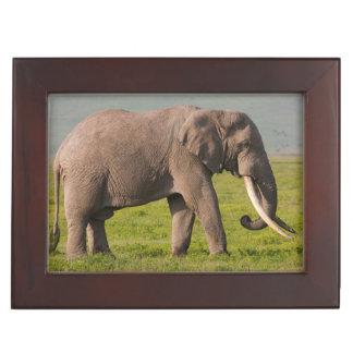 African Elephant, Ngorongoro Conservation Area Keepsake Box