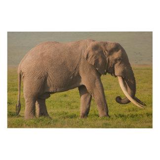 African Elephant, Ngorongoro Conservation Area Wood Print