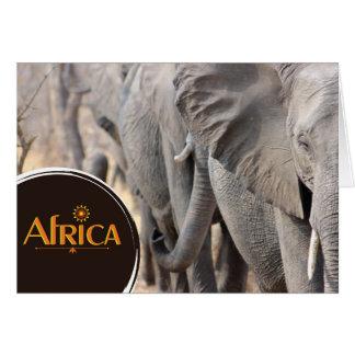 African elephant notecard