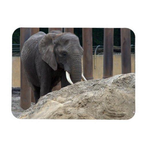 African Elephant Rectangular Magnet