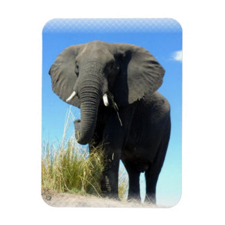African Elephant Premium Magnet Rectangle Magnets