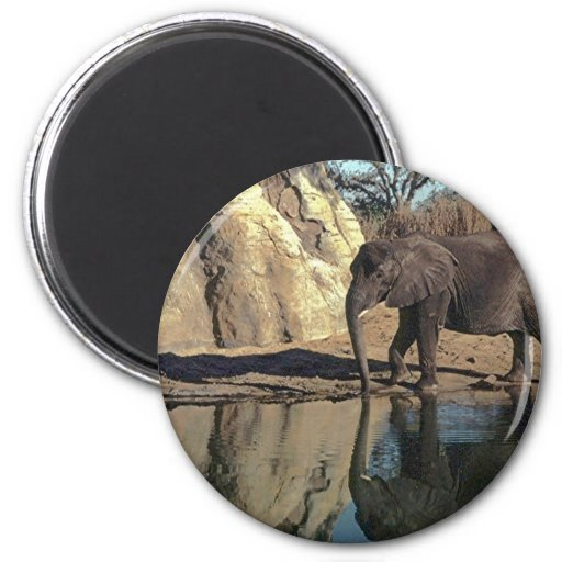 african elephant reflections fridge magnets