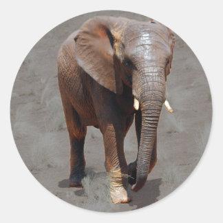 African elephant round sticker