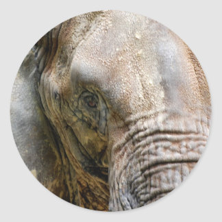 african elephant round stickers