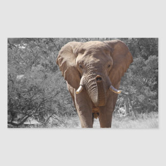 African Elephant Stickers