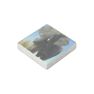 African Elephant Stone Magnet