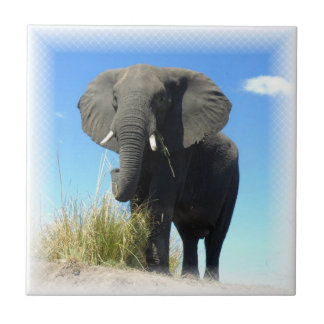 African Elephant Tile