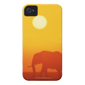 African elephant walking at sunset , Kenya Case-Mate iPhone 4 Cases