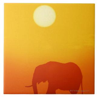African elephant walking at sunset , Kenya , Large Square Tile