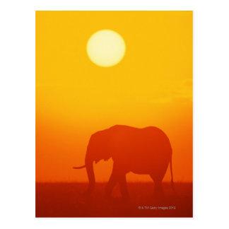 African elephant walking at sunset , Kenya , Postcard