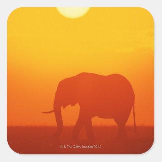 African elephant walking at sunset , Kenya Square Sticker
