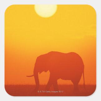 African elephant walking at sunset , Kenya , Square Sticker