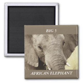 African elephant wildlife safari magnets